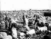 North Ronaldsay in the thirties. © The Orkney Library